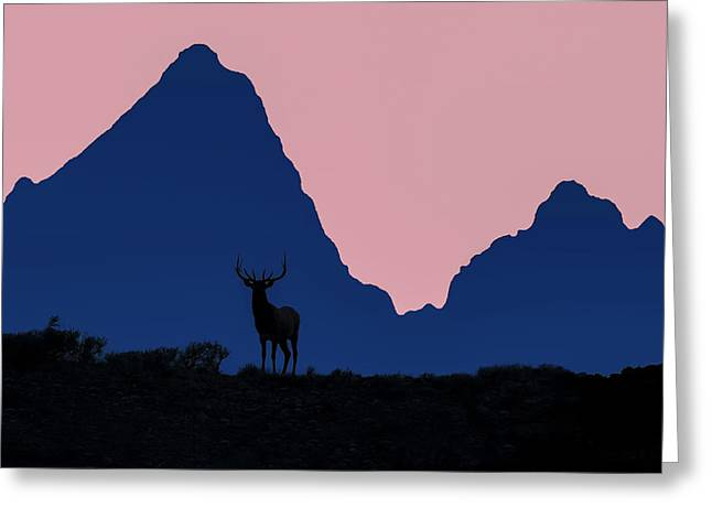 Elk In Sunset Silhouette In Front Greeting Card by Tom Norring