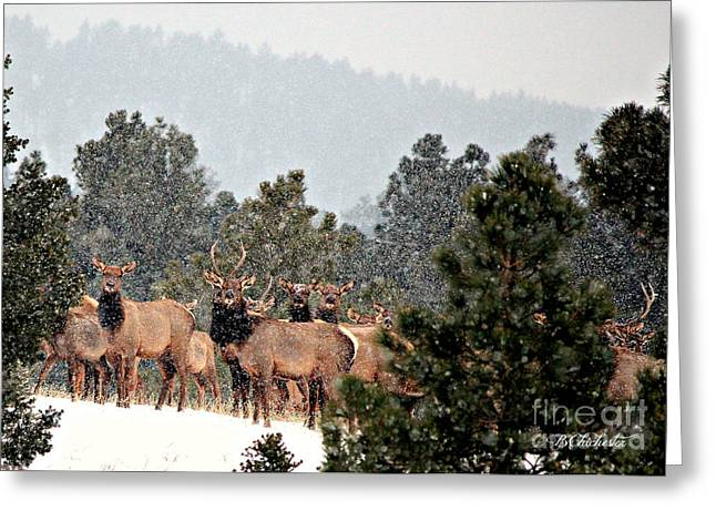 Greeting Card featuring the photograph Elk In The Snowing Open by Barbara Chichester
