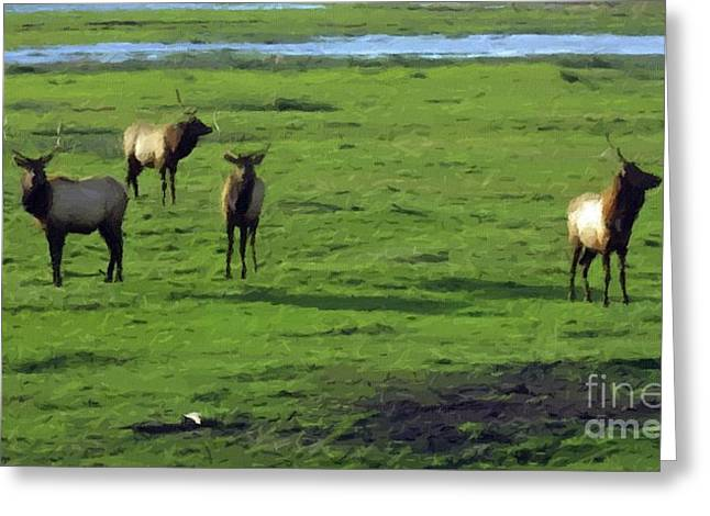 Elk  Greeting Card by Larry Stolle
