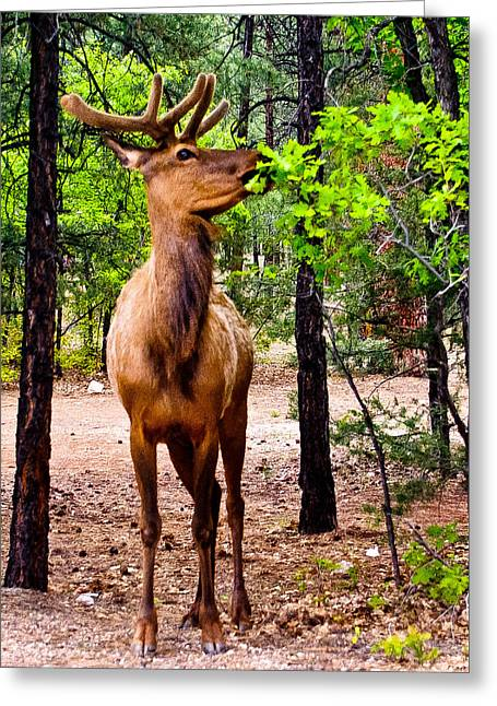 Greeting Card featuring the photograph Elk - Mather Grand Canyon by Bob and Nadine Johnston