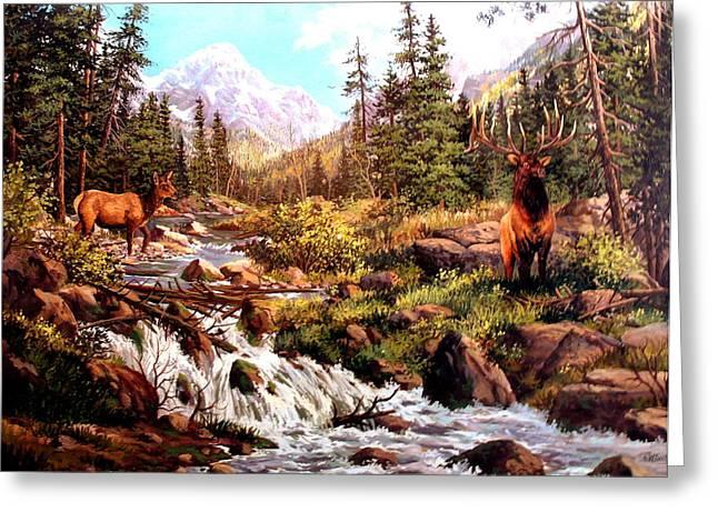 Elk Meadows Greeting Card by W  Scott Fenton