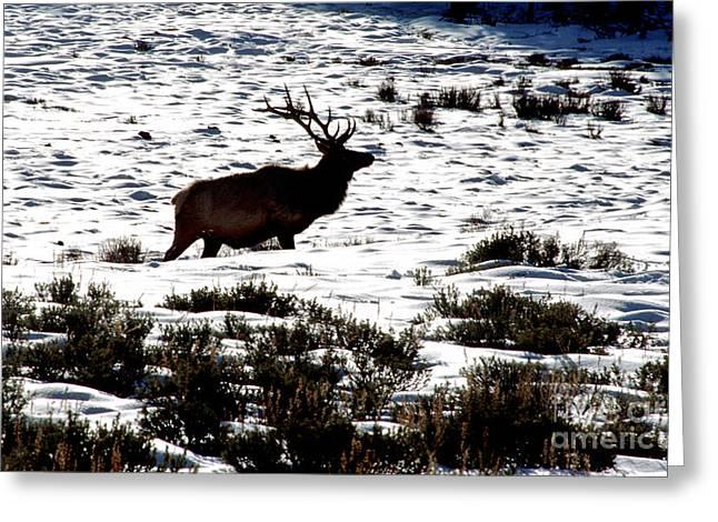 Elk Silhouette Greeting Card by Sharon Elliott