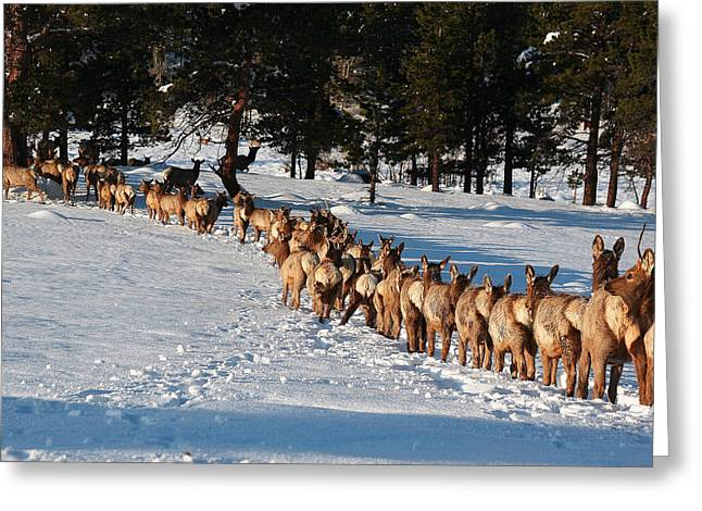 Elk Train Greeting Card by Steven Reed