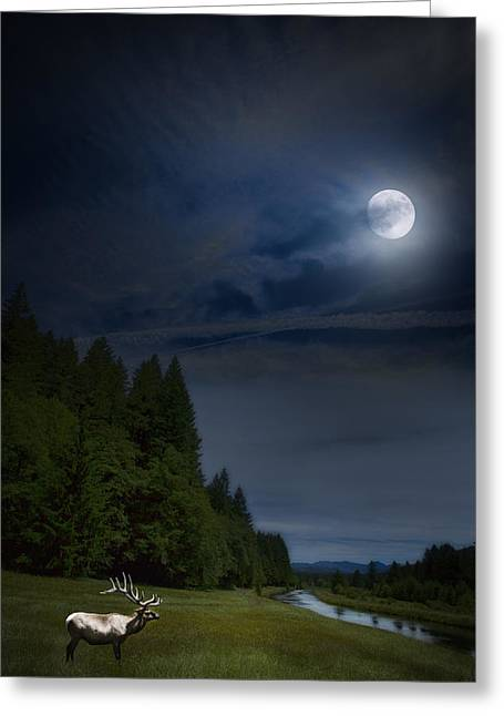Elk Under A Full Moon Greeting Card