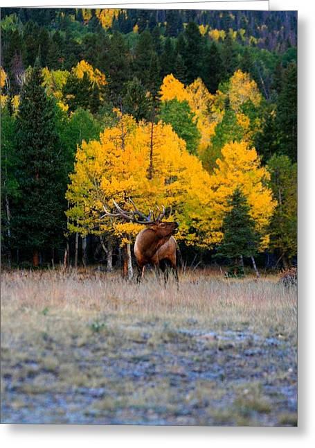 Elks Last Call Greeting Card by Rebecca Adams