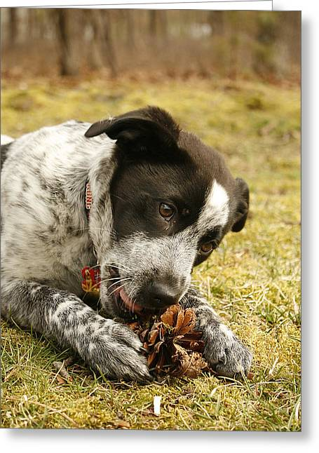 Ellie Vs. The Pine Cone Greeting Card by Kristia Adams