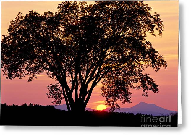 Greeting Card featuring the photograph Elm At Sunset by Alan L Graham