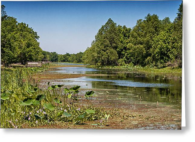 Greeting Card featuring the photograph Elm Lake At Brazos Bend In Texas by Zoe Ferrie