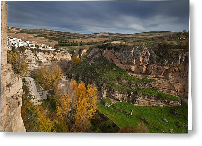 Elm Trees In Autumn In The Tajo Or Greeting Card by Panoramic Images