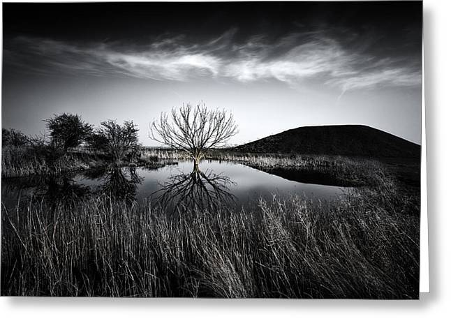 Elmley Marshes Greeting Card by Ian Hufton