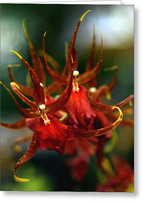 Embraced By An Orchid Greeting Card by Karen Wiles