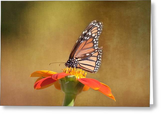 Embracing Nature Greeting Card by Kim Hojnacki