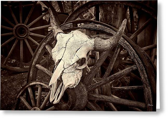 Embudo Skull Greeting Card by Christine Hauber