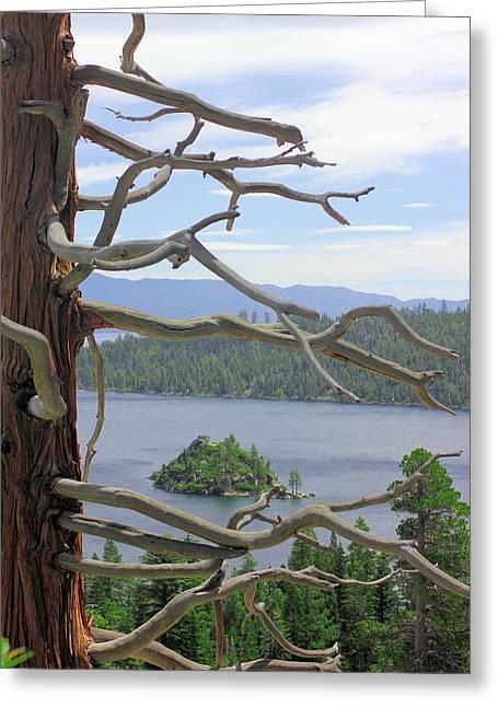 Emerald Bay Through Cedar Greeting Card by Mickey Hatt