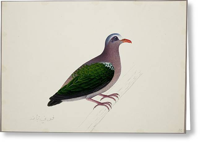 Emerald Dove Greeting Card by British Library