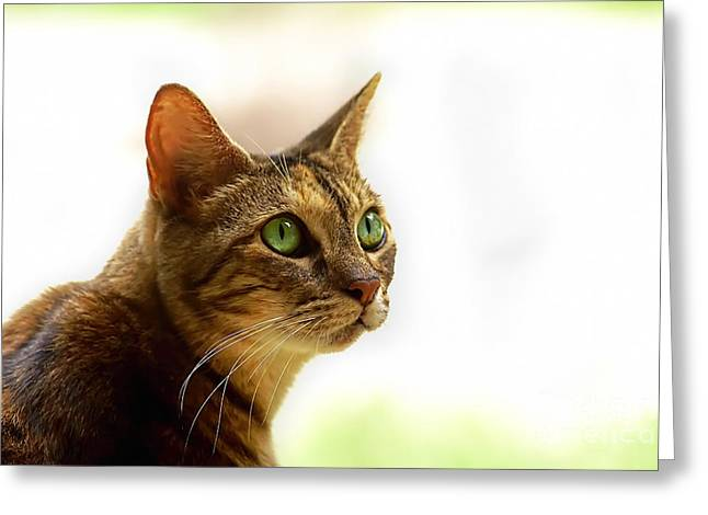 Greeting Card featuring the photograph Emerald Eyes by Olga Hamilton