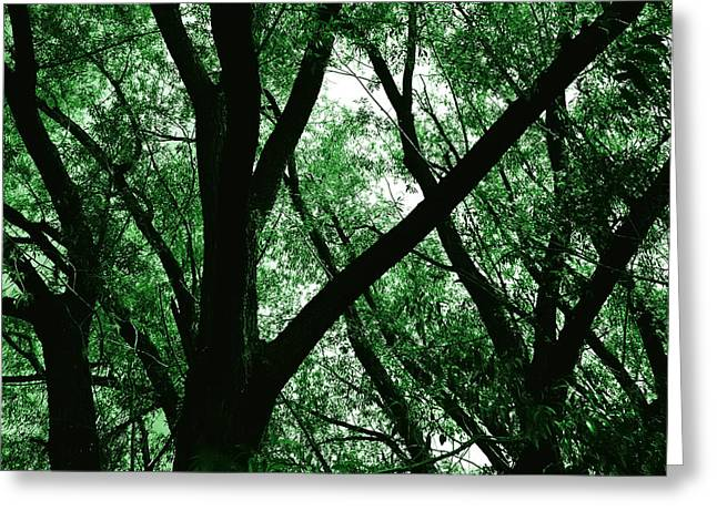 Emerald Forest Greeting Card