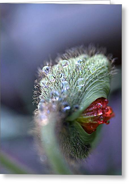 Greeting Card featuring the photograph Emergence by Joe Schofield