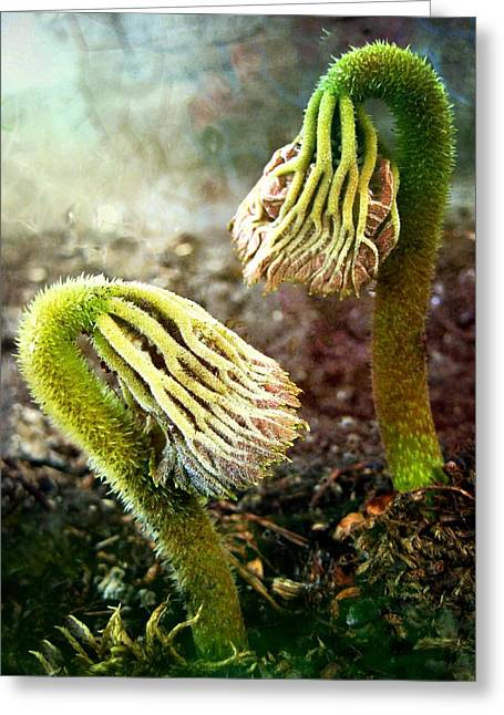 Emerging Sprouts Greeting Card by Shirley Sirois