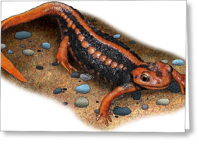 Emperor Newt Greeting Card