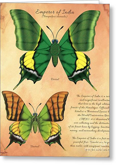 Emperor Of India Butterfly Greeting Card by Tammy Yee