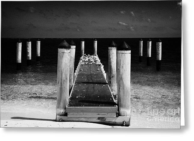 Empty Boat Pier With Seabirds Dry Tortugas Florida Keys Usa Greeting Card by Joe Fox