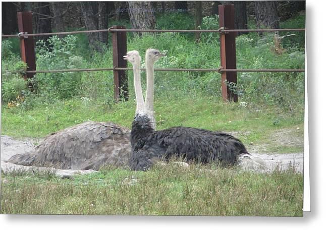 Emu Birds Greeting Card by Sonali Gangane