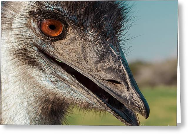 Emu Closeup  Greeting Card by Robert Frederick