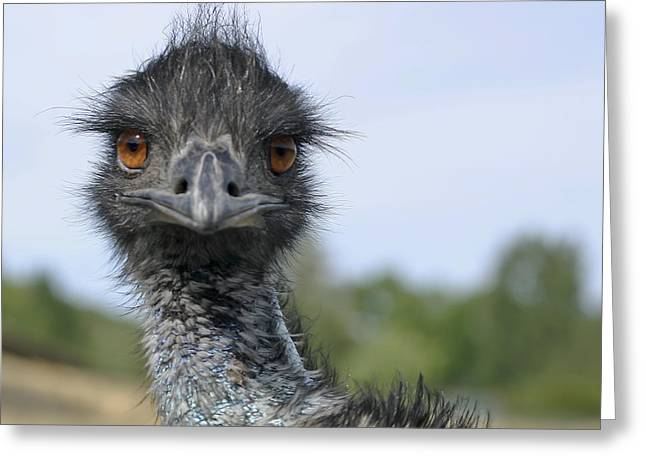 Greeting Card featuring the photograph Emu Gaze by Belinda Greb