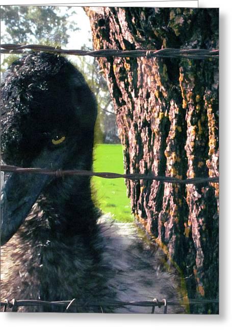 Emu Next To Tree Greeting Card