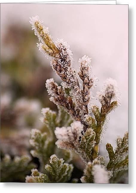 Encased In Ice Greeting Card by Dave Woodbridge