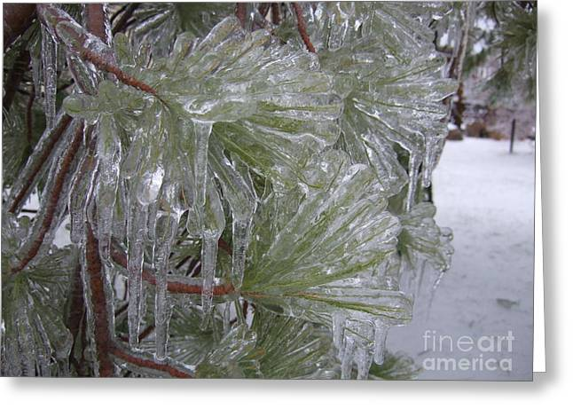Encased In Ice Greeting Card by Deborah DeLaBarre