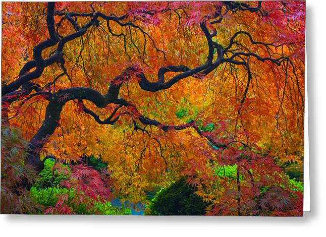 Enchanted Canopy Greeting Card by Patricia Babbitt