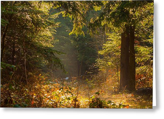Enchanted Forest Greeting Card by Evgeni Dinev