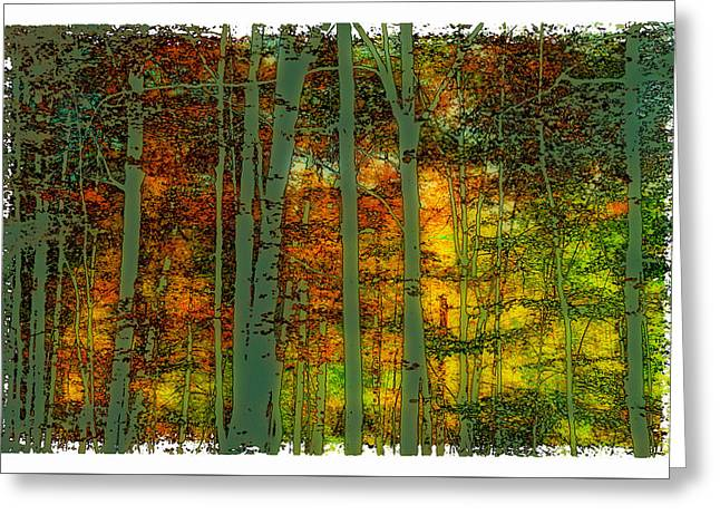 Enchanted Forest In Autumn Greeting Card by David Patterson