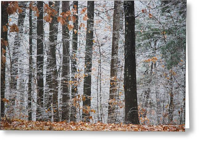 Enchanted Forest Greeting Card by Linda Segerson