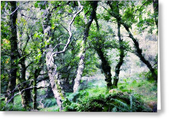 Enchanted Forest. The Kingdom Of Thetrees. Glendalough. Ireland Greeting Card by Jenny Rainbow