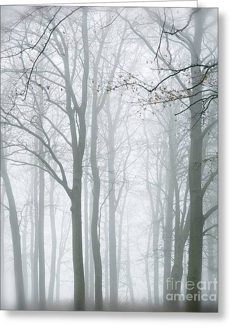Enchanted Forest The Yorkshire Wolds Greeting Card by John Potter