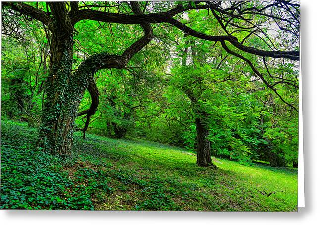 Enchanted Ivy Forest Greeting Card by Eti Reid