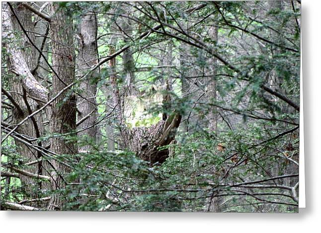 Greeting Card featuring the photograph Enchanted by Melissa Stoudt