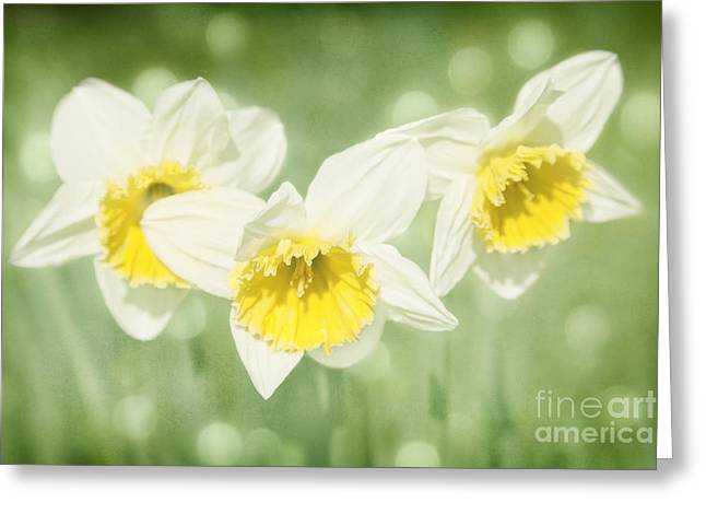 Enchanted Spring Daffodils Greeting Card by Natalie Kinnear