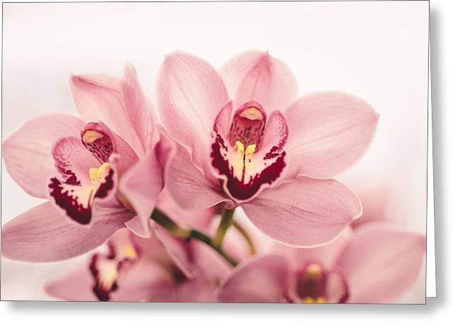 Enchanting Greeting Card by Nastasia Cook