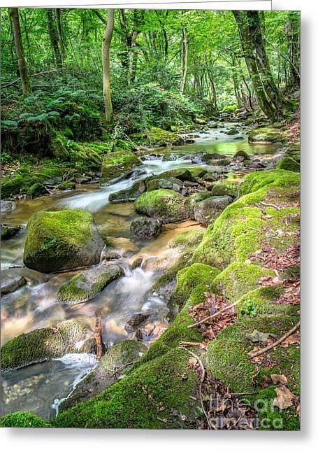 Enchanting River Greeting Card