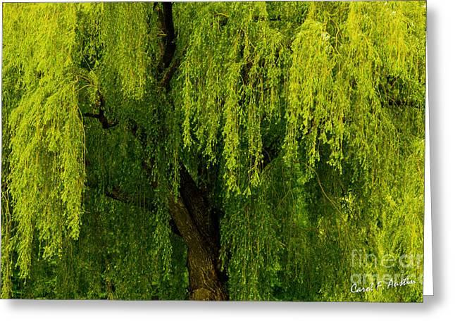 Enchanting Weeping Willow Tree  Greeting Card by Carol F Austin