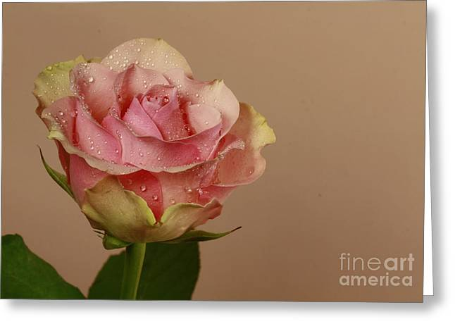 Enchantment Greeting Card by Inspired Nature Photography Fine Art Photography