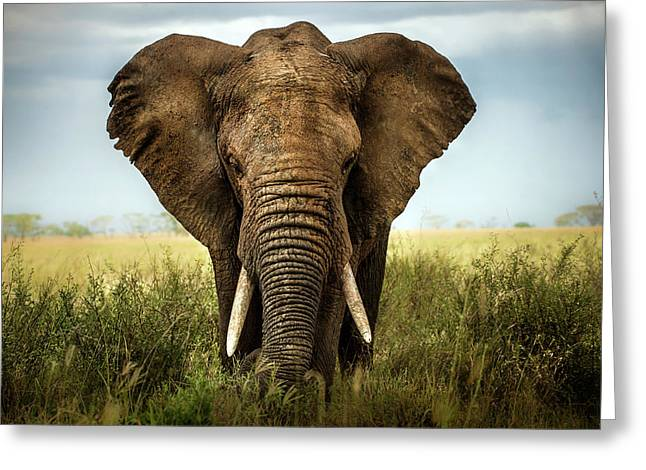 Encounters In Serengeti Greeting Card