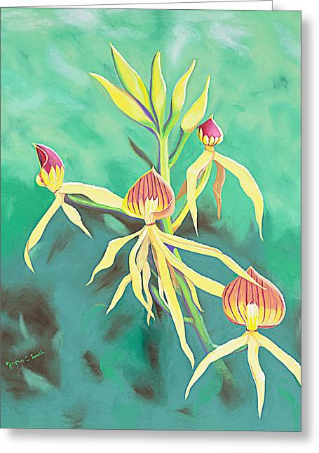 Encyclia Cochleata Orchid Greeting Card by Joyce Small