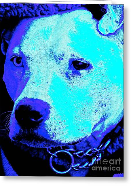 End Dog Fighting  Greeting Card by Q's House of Art ArtandFinePhotography