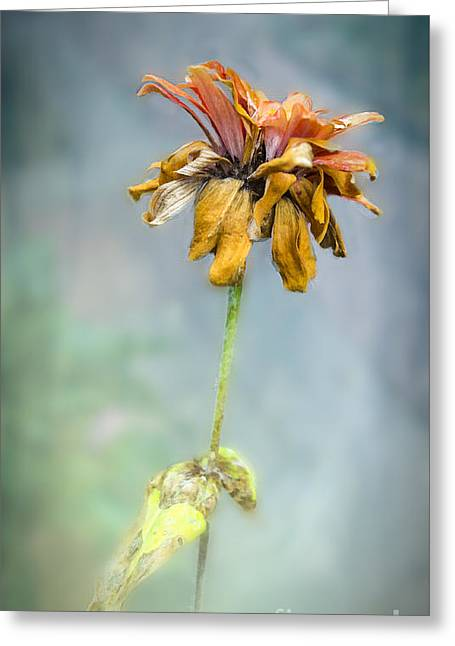 End Of Life Greeting Card by Betty LaRue