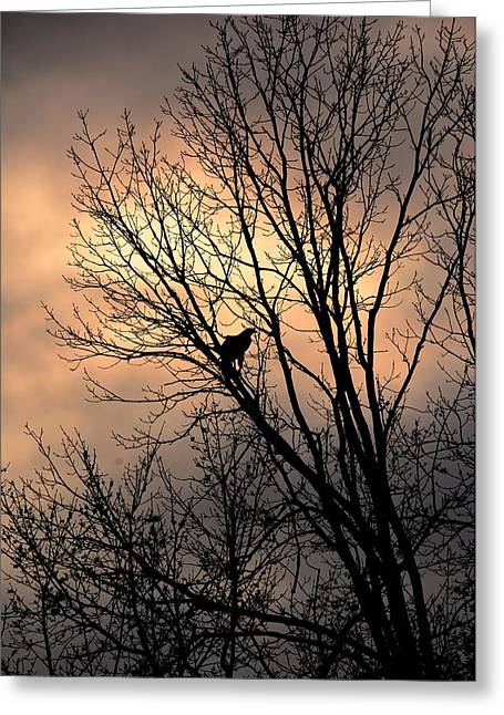 End Of The Day  Red Tailed Hawk Greeting Card